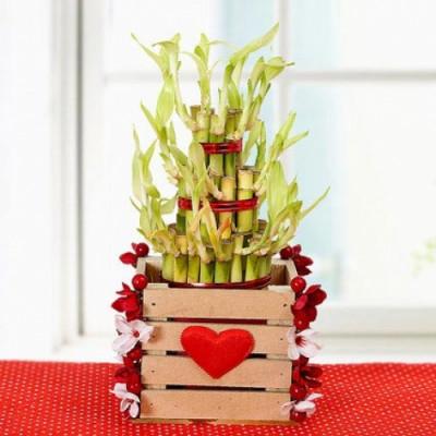 Lovely n Lucky Bamboo