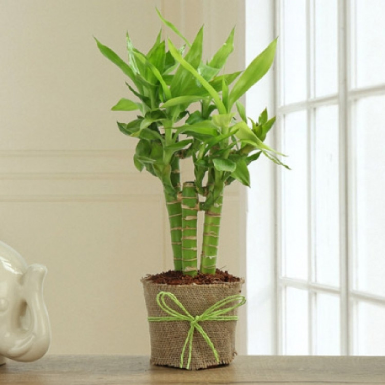 Bamboo Plant Decor