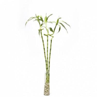 Twirling Bamboo Arrangement