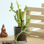 Be Lucky With Bamboo