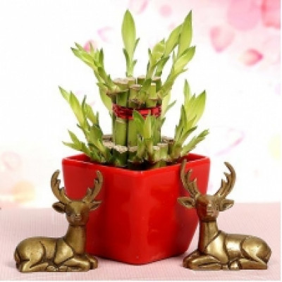 Lucky Bamboo and Deer