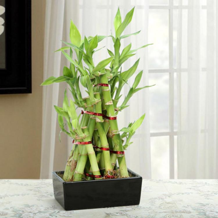 Bamboo Pyramid