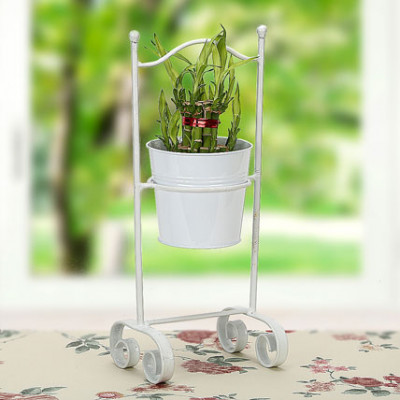 Lucky Bamboo with Planter