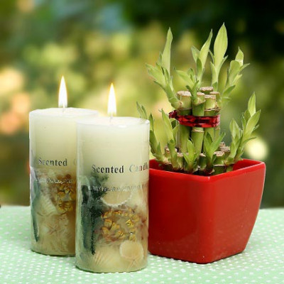 Scented Candles and Lucky Bamboo