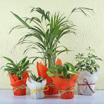 Set of 5 Exotic Green Plants