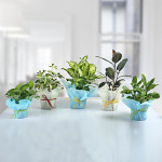 Set of 5 Refreshing Green Plants